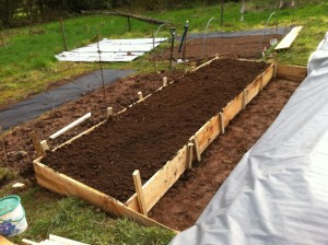 The first raised bed awaiting black mulch and planting with beans and a few heirloom potatoes